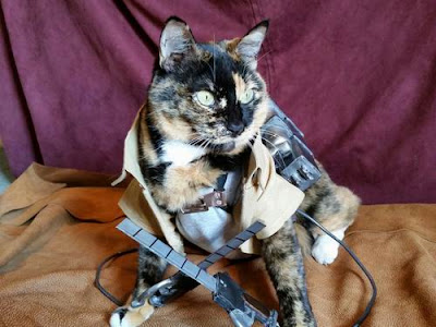 Ereneko kucing cosplayer attack on-titan 02