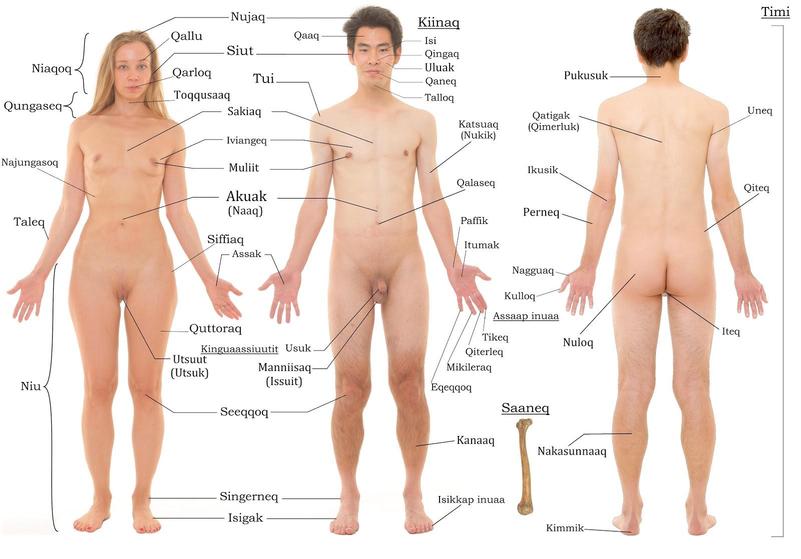 Eskimo Land Anatomi Anatomy