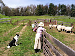 A Day at Dayspring Farm