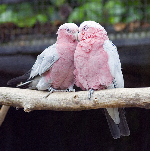 Cockatoos: Everything You Need to Know About the Bird Species