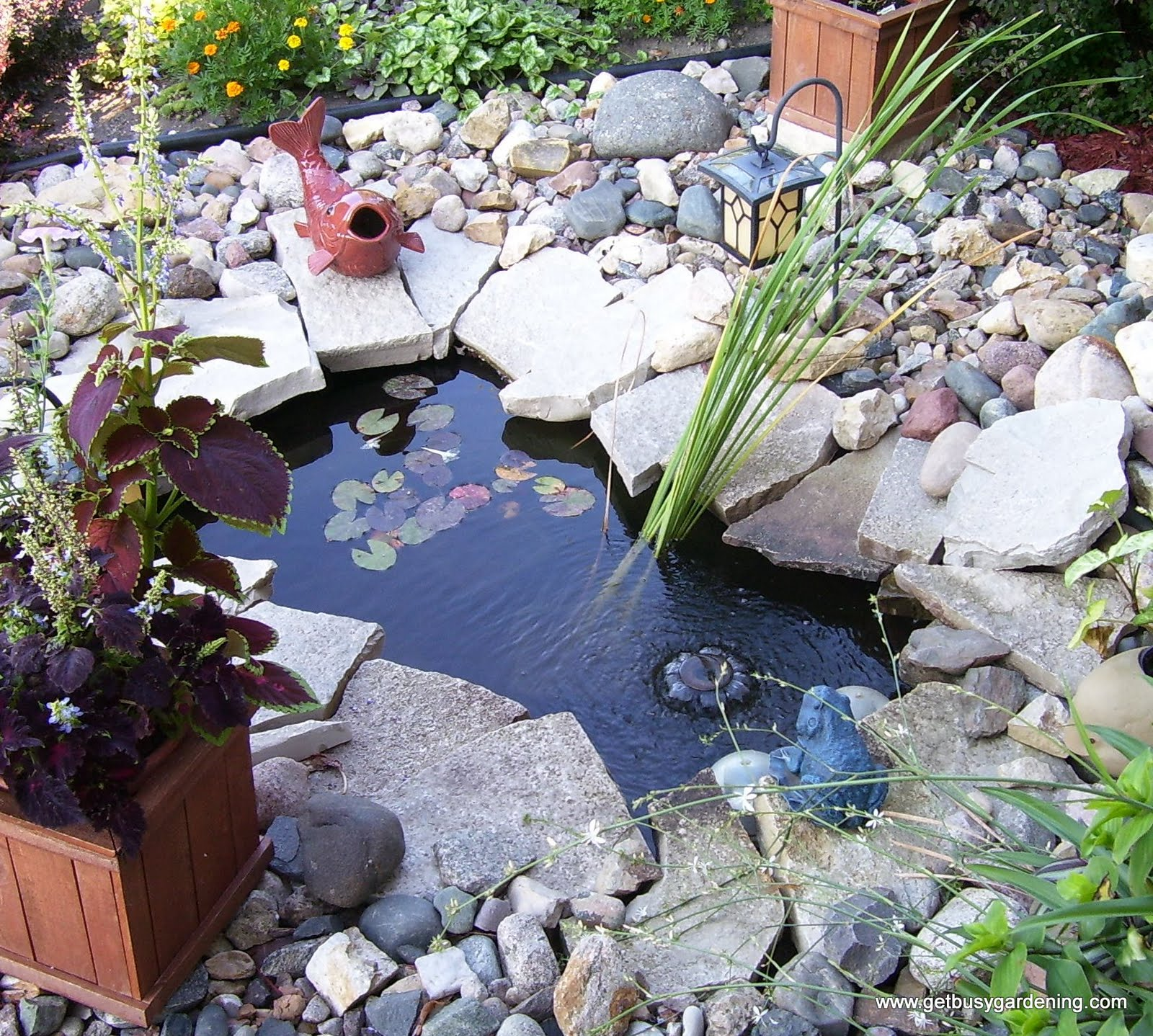 How To Empty Backyard Pond : Keeping Pond Water Clear the Natural Way