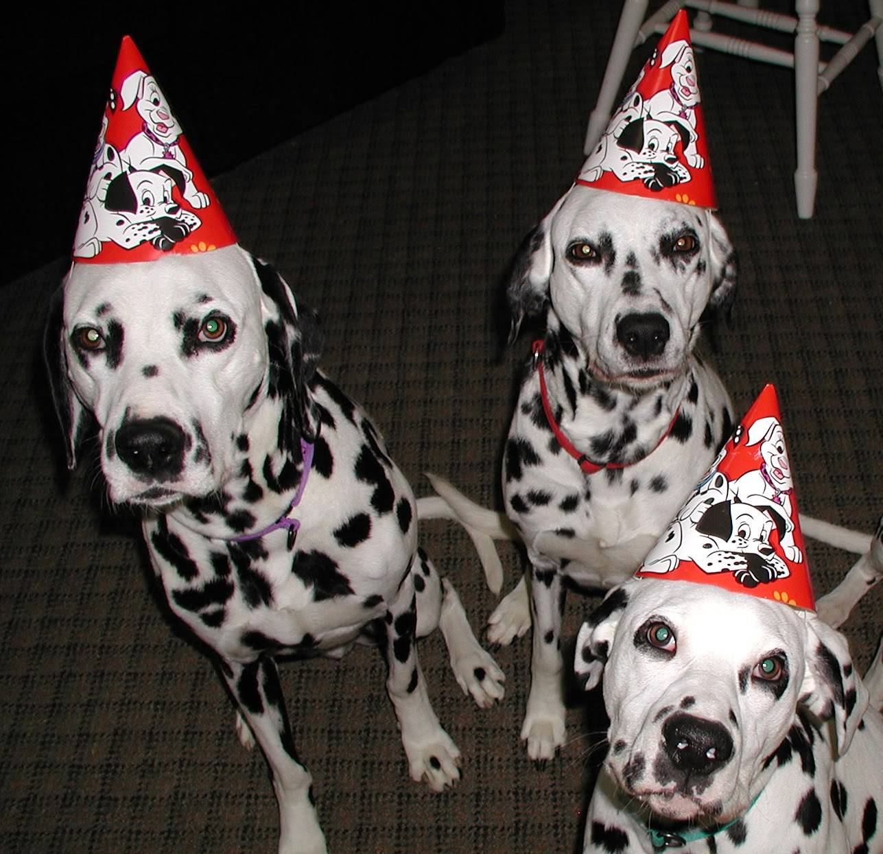 Happy+Birthday+Dalmatian+image best birthday cake hd pic 3 on best birthday cake hd pic