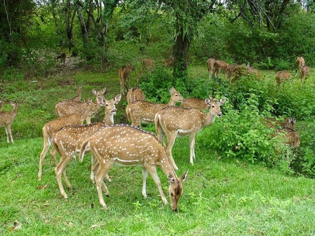 Bandipur National Park,Karnataka