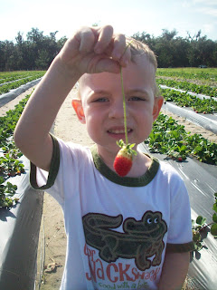 Baby picks strawberry
