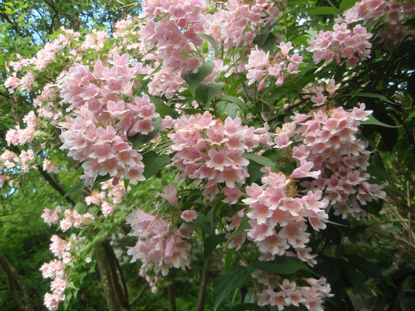 buske rosa blommor