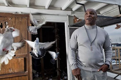 mike tyson pet pigeons