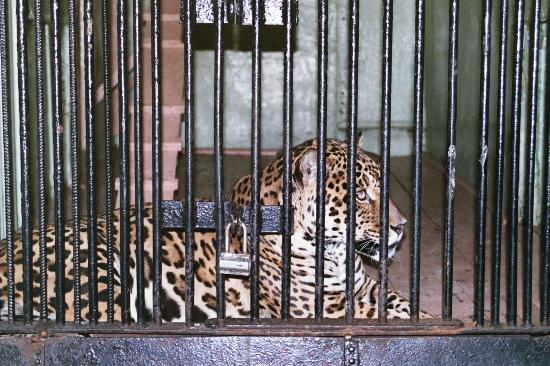 Animals Zoo Park: zoo animals in cages Pictures & Photos