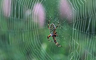 big spider (22)