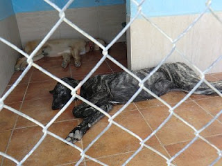 Villa con 6 meses EDUCAN Alicante adiestramiento canino a domicilio