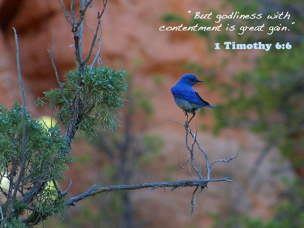 http://4.bp.blogspot.com/-E7WRt6ULnXc/TfX11QjAXQI/AAAAAAAAAU8/14O7-_PZDm0/s1600/christian+bird+wallpaper.jpg