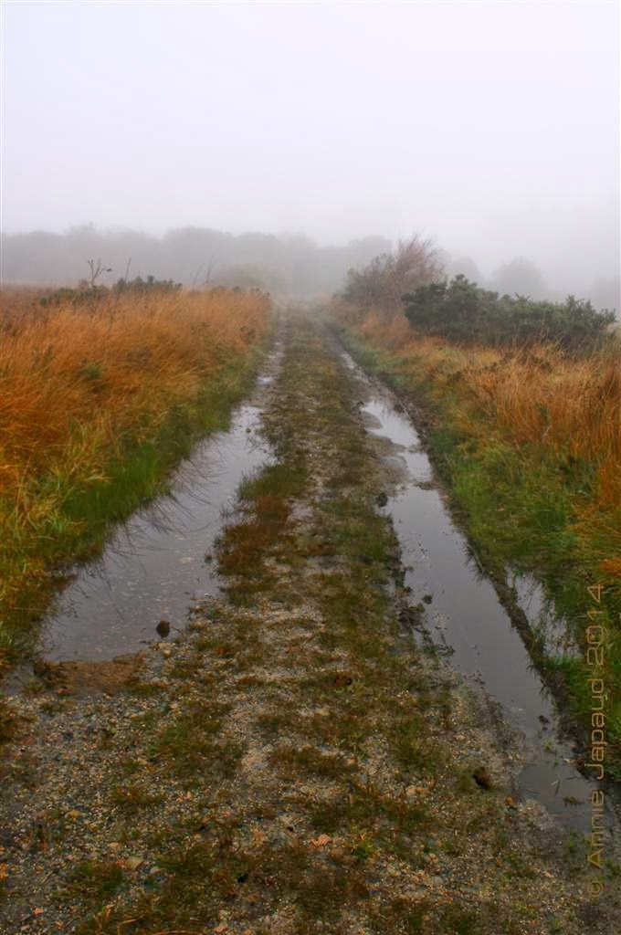 more puddles on a country road with rusty grass on the sides