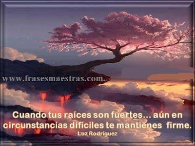 frases de Luz Rodriguez
