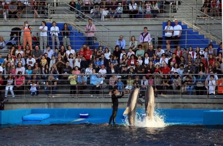 El Oceanogràfic celebra por segundo año la actividad 'Dreamnight'