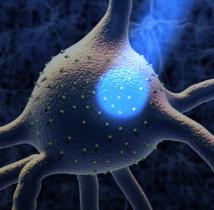 Eliminan el comportamiento compulsivo aplicando luz sobre una región cerebral