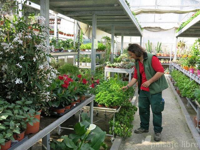 Centro de jardineria madrid elegant verde es vida es la revista de jardinera de mayor difusin - Centro de jardineria madrid ...