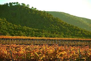 imagen deVista panoramica de viñedos de bodega los frailes