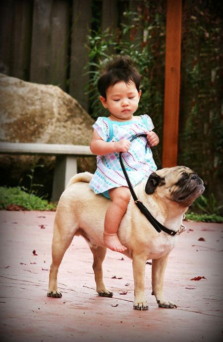 Semoga artikel Anak Kecil Berkuda Anjing (foto) bermanfaat bagi Anda.
