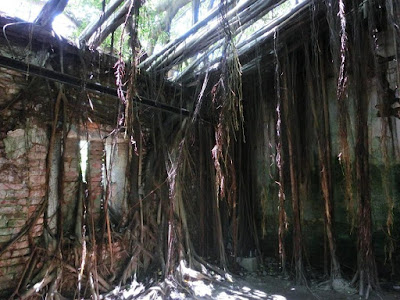 Banyan Tree and A Warehouse at Anping Tree House Tainan