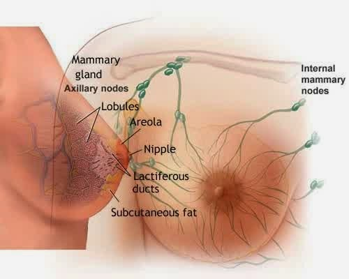 Kesehatan, Seputar wanita, Kesehatan payudara, cara merawat payudara,