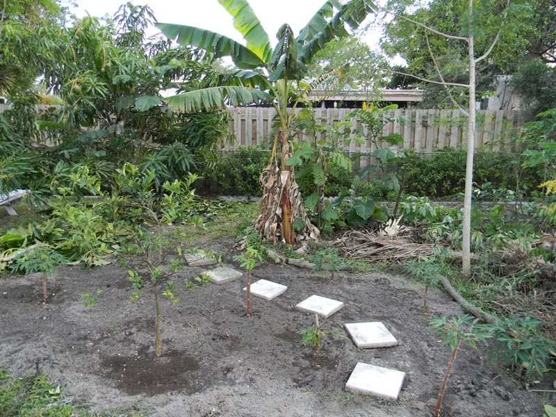 Florida Survival Gardening: The Great South Florida Food Forest ...