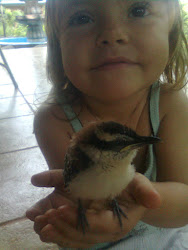 my lttle birdie...