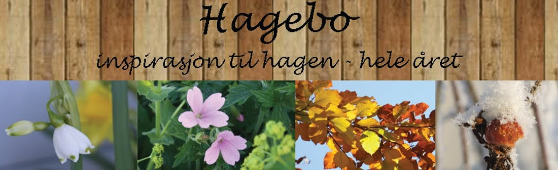 Hagebo