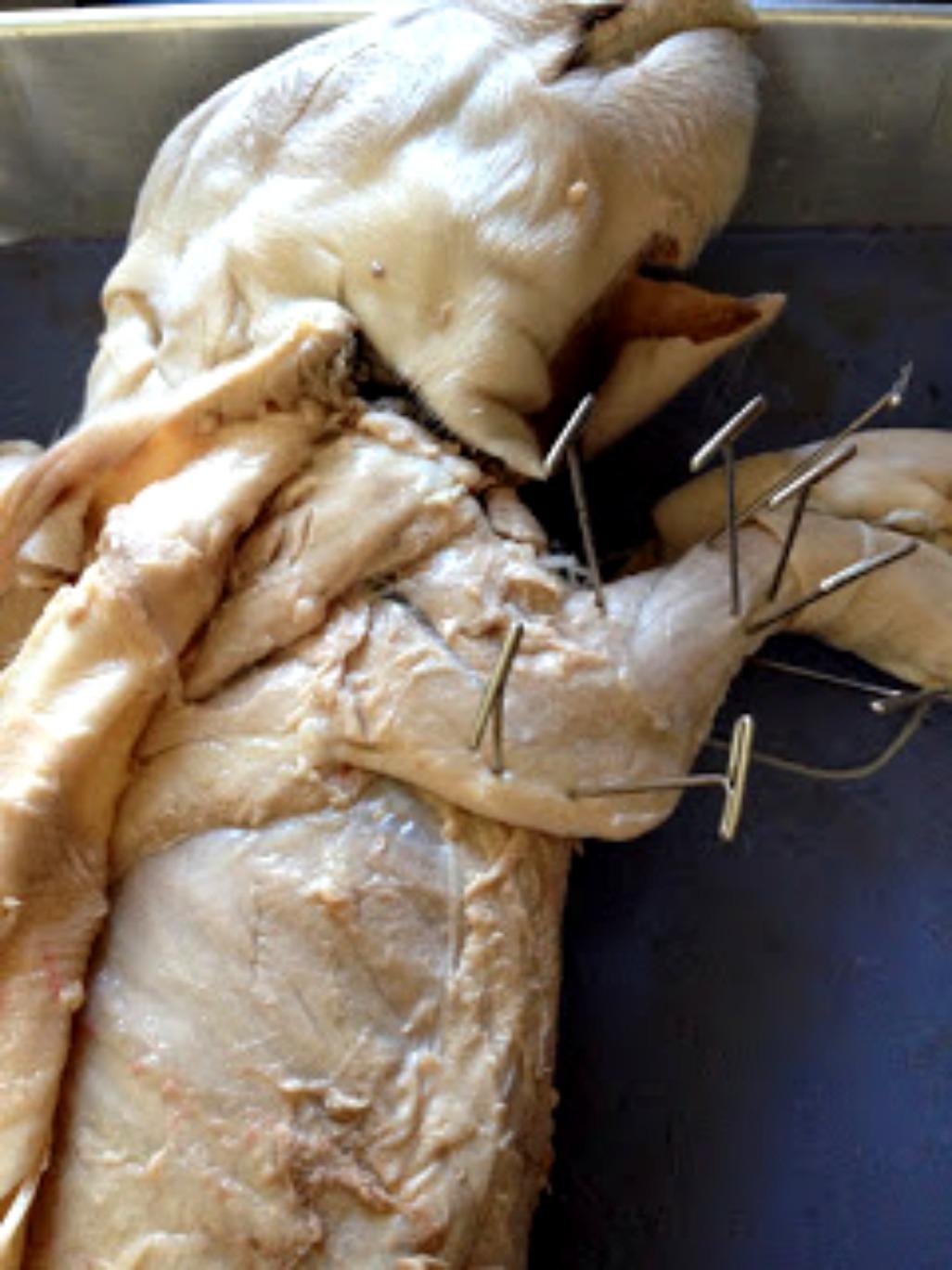 Fetal Pig Blog: Procedure C - Skeletal Muscle Dissection