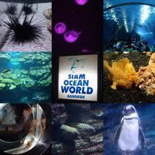 siam ocean world thailand