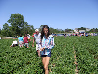 Strawberry picking at Maxwell's Farm