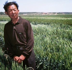 http://wheat.org/global-partnership-propels-wheat-productivity-in-china/