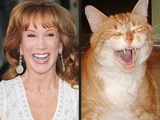 Uk Based Celebrities With Famous Cat Dog
