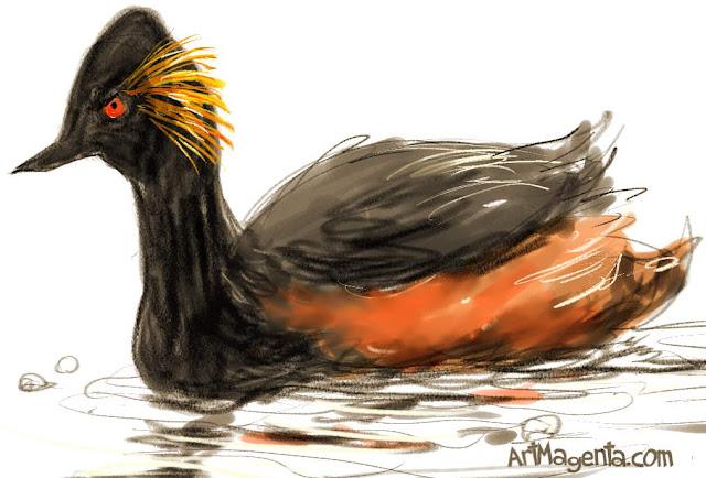 Black-necked Grebe sketch painting. Bird art drawing by illustrator Artmagenta.