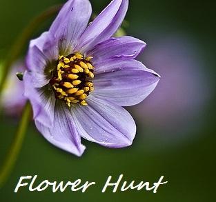 Flower Hunt