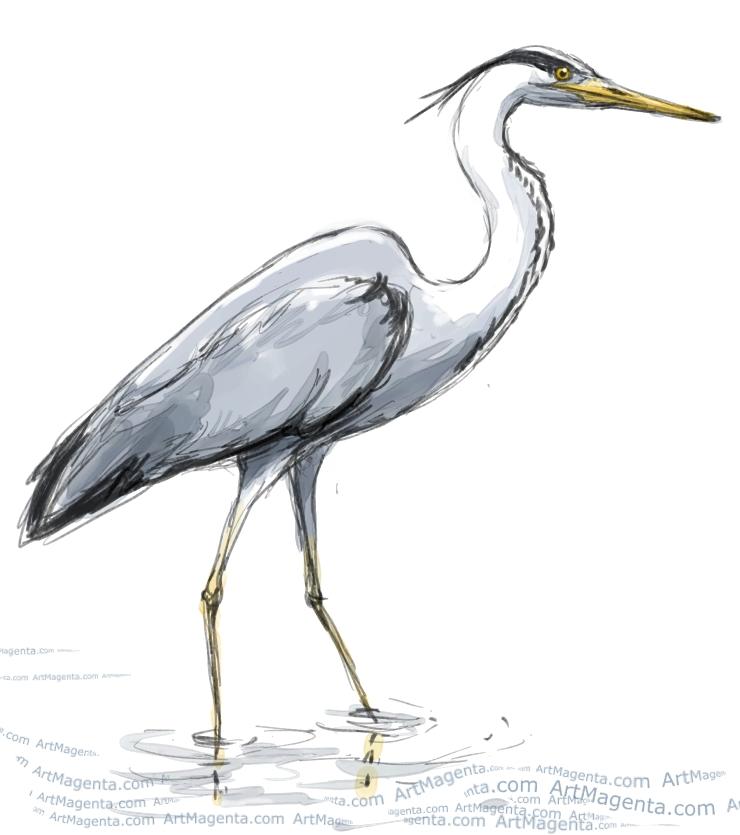 Birds Grey Heron