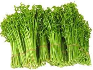 การปลูกผักกูด ปลูกถูกวิธี ปลูกอย่างไรถึงรวย ?