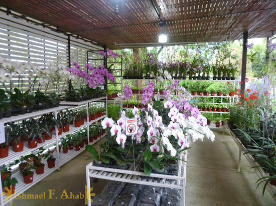 Beautiful flowers for sale at Doi Tung Royal Villa