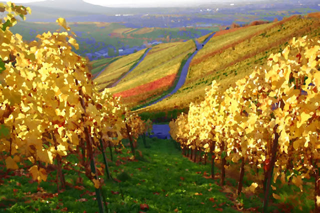 Autumn At The Vineyard3