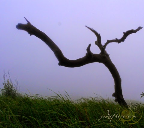Dead tree against the grassland hover_share