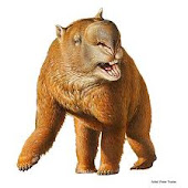 Diprotodon (giant wombat)