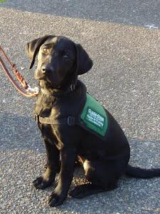 Puppy #14 Vannie (SARITA/HURLEY)