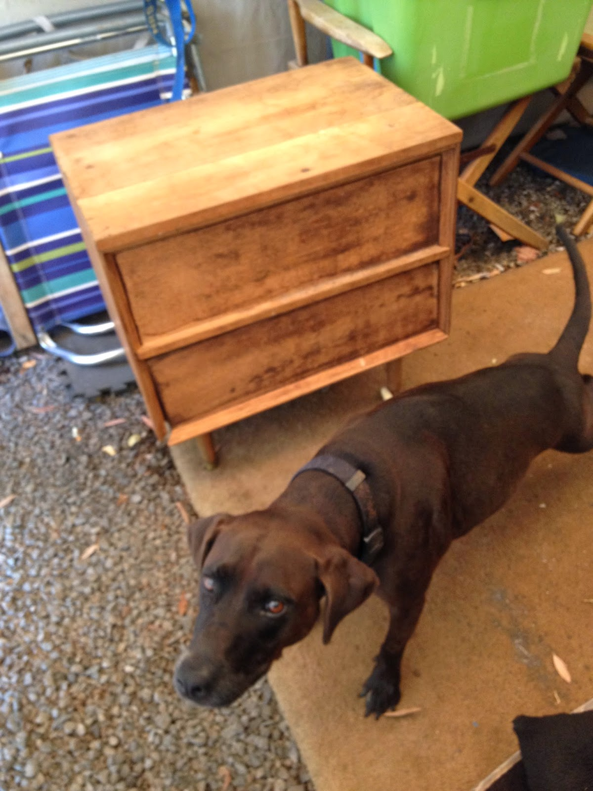 black DIY mid-century side table dog pose godiva