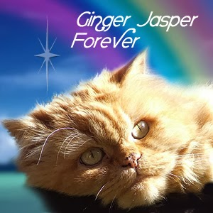 RUN FREE GINGER JASPER