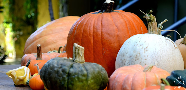 Citrouilles à gogo - Halloween