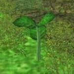 Mugwort screenshot harvest moon wonderful life