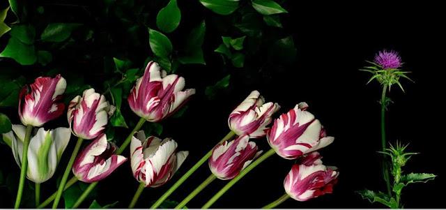 fotografias-de-flores
