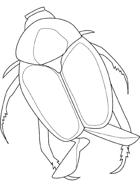june bug coloring pages - photo#5