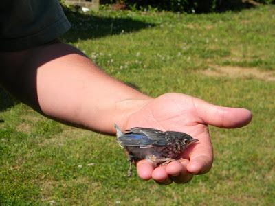 "birds in obe flew over a In ""hrafninn"" by vilhjálmur vilhjálmsson (villi vil), he sings about the raven ""bird"" aka jón valur guðmundsson (valur means 'grey falcon') is not."