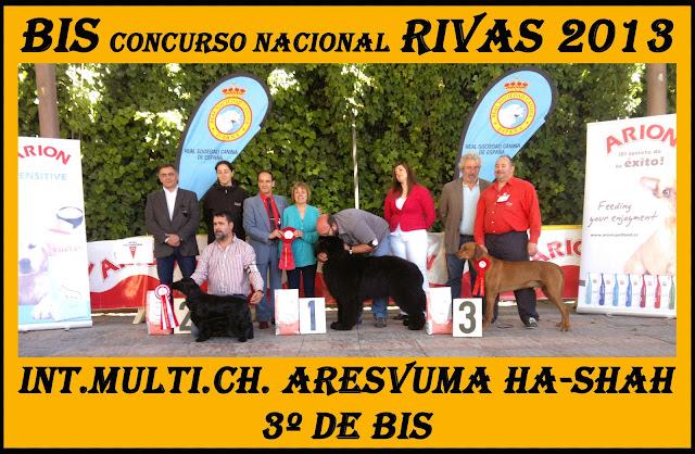 Concurso Nacional Canino Rivas Vaciamadrid. BIS.