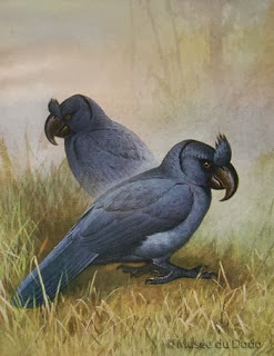 Papagayo de Mauricio: Lophopsittacus mauritianus