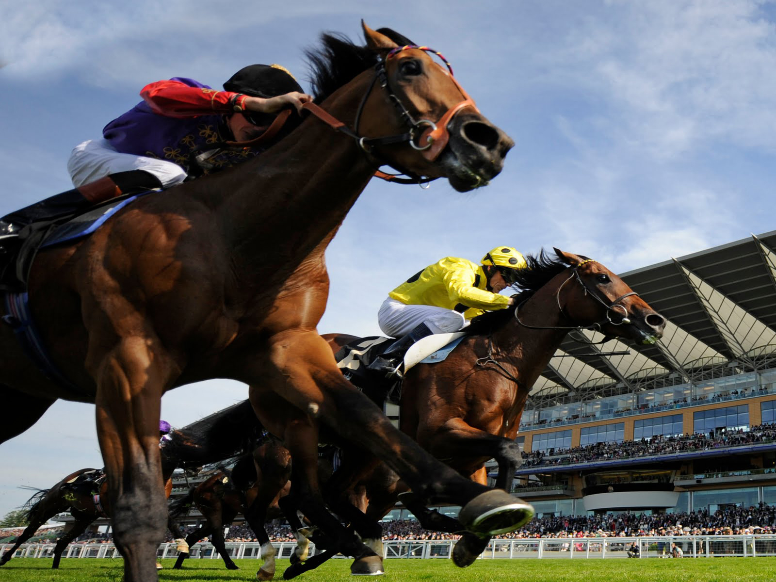 horse racing Racingcom is australia's premier resource for racing news, video, raceday information & profiles watch live & on-demand victorian horse racing anywhere, anytime.